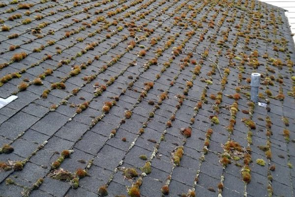 window-butler-ottawa-residential-home-roof-cleaning-washing-6-before